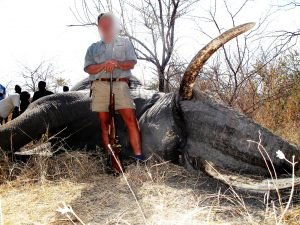 Elephant-problem-bull-hunted-Zambezi-Region